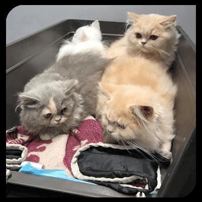 clinique-veterinaire-deswijsen--animaux-veterinaire-Gembloux