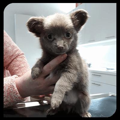 horaires-clinique-veterinaire-Gembloux