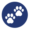 icons-clinique-assistantes-veterinaire-veterinaire-Gembloux