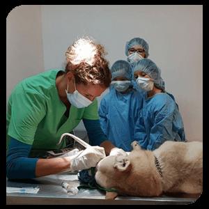 urgences-cabinet-veterinaire-deswijsen-veterinaire-Gembloux
