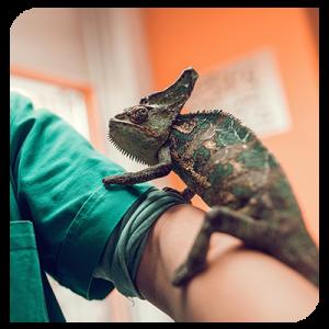 reptile-veterinaire-Gembloux